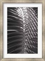 Framed Palm Detail I BW