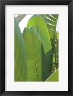 Framed Palm Detail IV