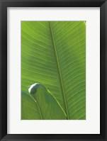 Framed Palm Detail III