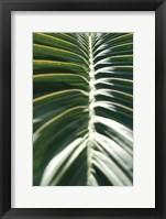 Framed Palm Detail II