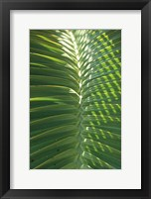 Framed Palm Detail I