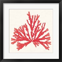 Framed Pacific Sea Mosses IV Red