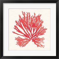 Framed Pacific Sea Mosses II Red