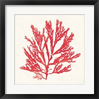 Framed Pacific Sea Mosses I Red