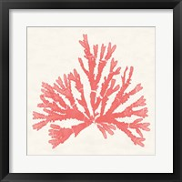 Framed Pacific Sea Mosses IV Coral