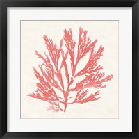 Framed Pacific Sea Mosses I Coral