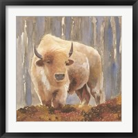 Framed White Buffalo