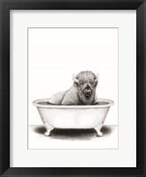Bison in Tub Framed Print