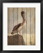 Framed Vintage Pelican II