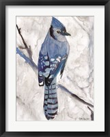 Framed Blue Jay 1