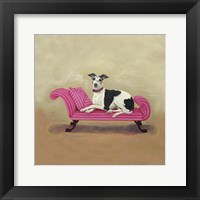 Framed Italian Greyhound on Pink
