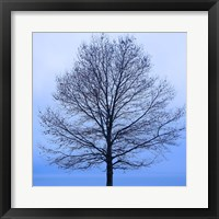 Framed November Tree