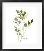 Framed Herb Garden Sketches II
