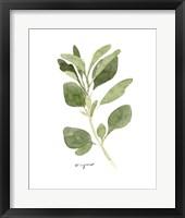 Framed Herb Garden Sketches III