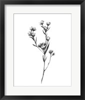Framed Wild Thistle I