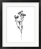 Framed Wild Thistle II