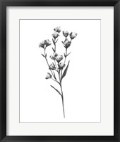 Framed Wild Thistle III