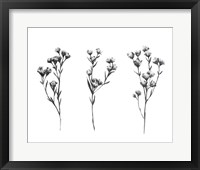 Framed Wild Thistle IV