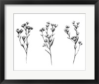 Framed Wild Thistle V