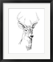 Framed Young Buck Sketch I