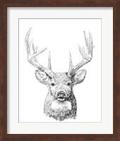 Framed Young Buck Sketch II
