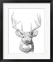 Framed Young Buck Sketch II