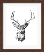 Framed Young Buck Sketch III