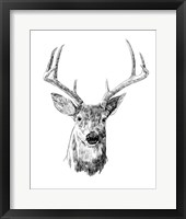Framed Young Buck Sketch III