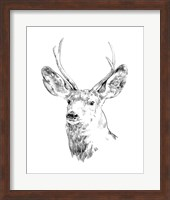 Framed Young Buck Sketch IV
