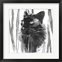 Framed Still Cat I