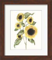 Framed Sunflower Composition I