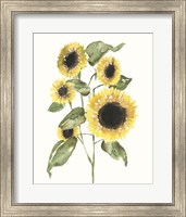 Framed Sunflower Composition I