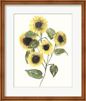 Framed Sunflower Composition II