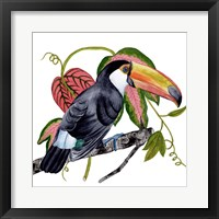 Framed Toco Toucan II