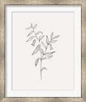 Framed Wild Foliage Sketch IV