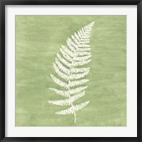 Framed Forest Ferns III