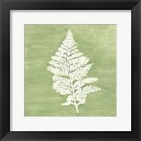 Framed Forest Ferns IV