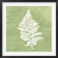 Framed Forest Ferns IV
