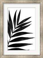 Framed Black Palms I