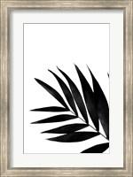 Framed Black Palms II
