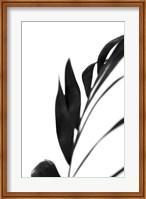 Framed Black Palms III