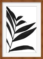 Framed Black Palms IV