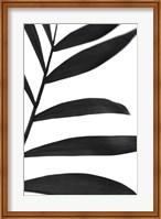 Framed Black Palms V