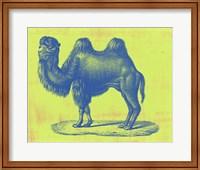 Framed Safari Pop IV