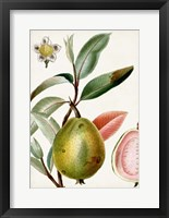 Framed Turpin Tropical Fruit IX
