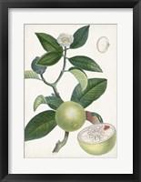 Framed Turpin Tropical Fruit XI