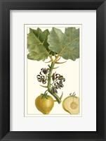 Framed Turpin Exotic Botanical IV