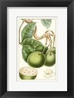 Framed Turpin Exotic Botanical VI