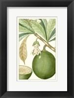 Framed Turpin Exotic Botanical VIII