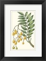 Framed Turpin Exotic Botanical IX